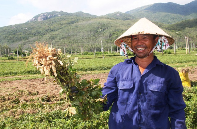 Nông dân thu về trên 6 triệu đồng/sào nhờ... làm bạn với cây đậu phộng - 1
