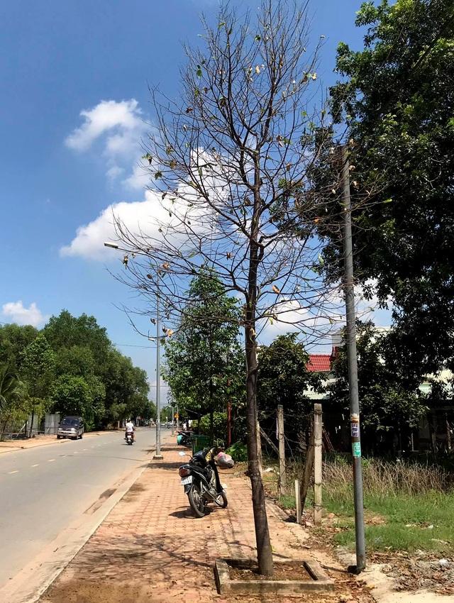Hàng nghìn con sâu lạ ăn trụi lá cây bên đường - 7