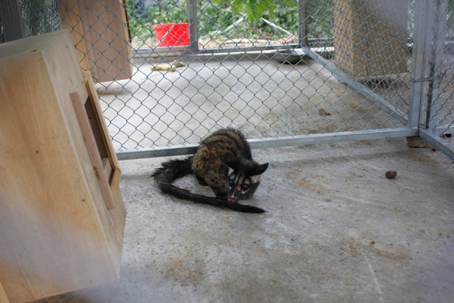 Tiếp nhận 68 cá thể động vật hoang dã để thả về tự nhiên - 1