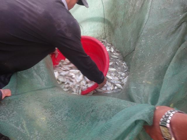 """Những """"mẻ lưới niềm vui"""" của ngư dân Đà Nẵng sau nới lỏng giãn cách xã hội - 4"""