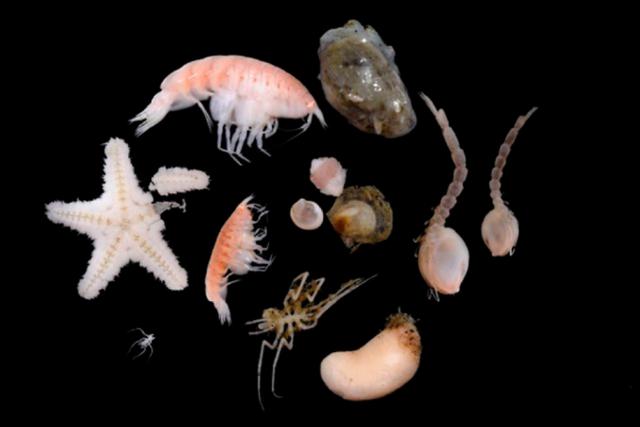 Kinh ngạc trước những sinh vật kỳ lạ sống dưới nơi sâu nhất của Nam Cực - 1