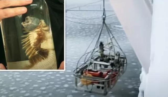 Kinh ngạc trước những sinh vật kỳ lạ sống dưới nơi sâu nhất của Nam Cực - 2
