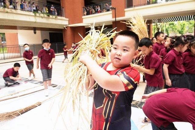 Trường tiểu học Trung Quốc dạy học sinh cách thu hoạch lúa - 1