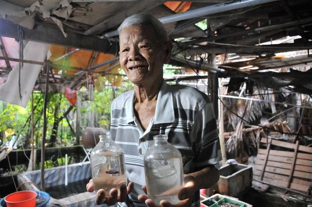 Cụ ông 83 tuổi gắn bó với nghề nuôi cá cảnh từ 6 cặp cá thia lia - 1