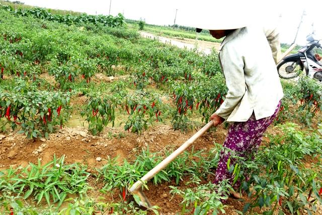 Quảng Nam: Gần 2.500 hộ nghèo đăng ký thoát nghèo bền vững - 2