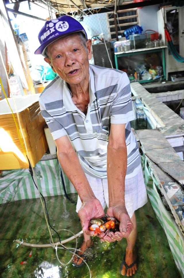 Cụ ông 83 tuổi gắn bó với nghề nuôi cá cảnh từ 6 cặp cá thia lia - 4