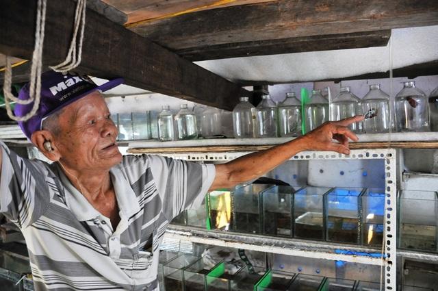Cụ ông 83 tuổi gắn bó với nghề nuôi cá cảnh từ 6 cặp cá thia lia - 2