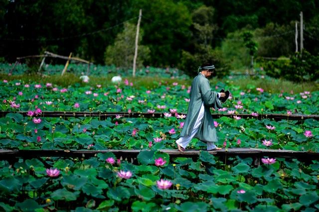 Du khách mê mẩn với đầm sen nở rực ở ngoại thành Sài Gòn - 5