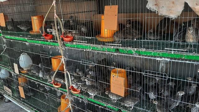 Quả trĩu cành, gà đẻ trứng trên sân thượng của bà chủ nhà trọ Sài Gòn - 12