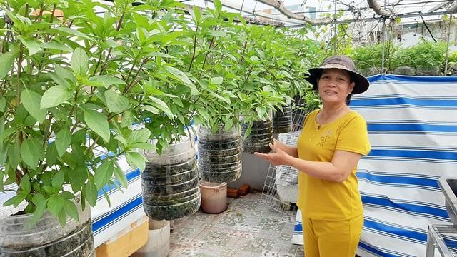 Quả trĩu cành, gà đẻ trứng trên sân thượng của bà chủ nhà trọ Sài Gòn - 2