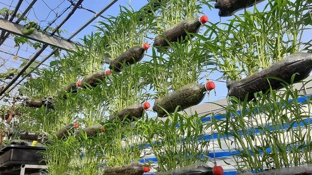 Quả trĩu cành, gà đẻ trứng trên sân thượng của bà chủ nhà trọ Sài Gòn - 6
