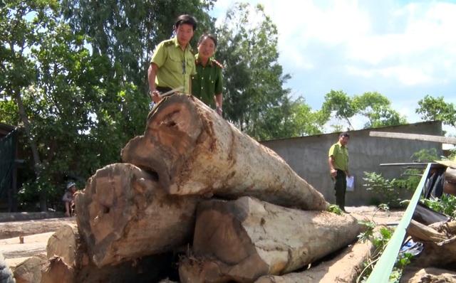 Thêm thủ đoạn phá rừng tại Phú Yên: Dùng cả đàn trâu kéo gỗ đi tiêu thụ! - 4