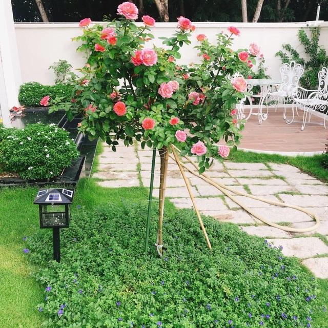 Biệt thự nhà vườn ngập tràn các loại hoa của gia đình ở Bình Dương - 5