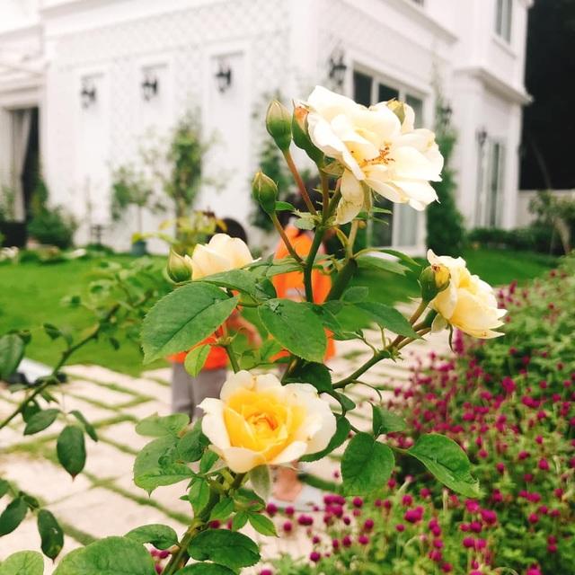 Biệt thự nhà vườn ngập tràn các loại hoa của gia đình ở Bình Dương - 7