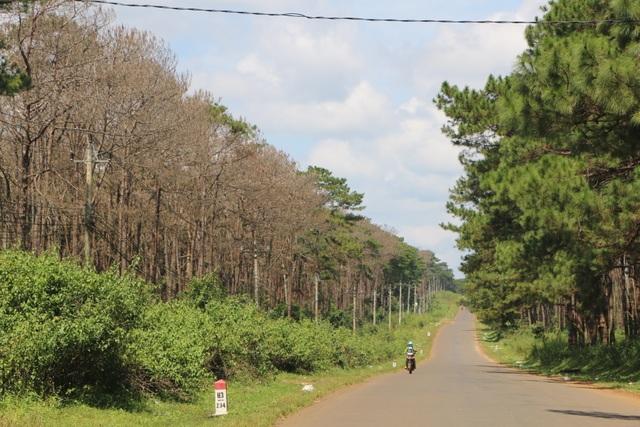 """Những cánh rừng """"chết"""" dọc quốc lộ - 2"""