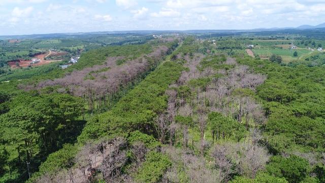 """Những cánh rừng """"chết"""" dọc quốc lộ - 3"""