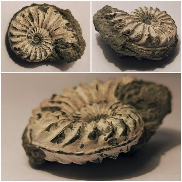 Những hóa thạch được bảo quản tốt nhất của các sinh vật bí ẩn cổ xưa - 4