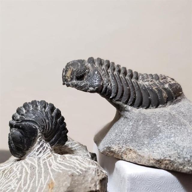 Những hóa thạch được bảo quản tốt nhất của các sinh vật bí ẩn cổ xưa - 5