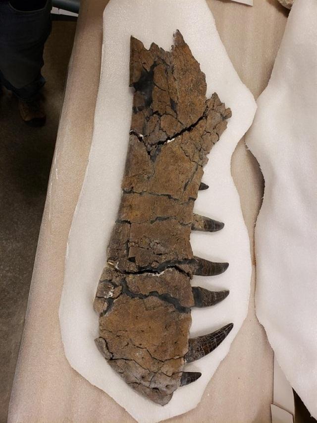 Những hóa thạch được bảo quản tốt nhất của các sinh vật bí ẩn cổ xưa - 7