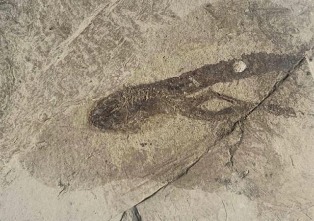 Những hóa thạch được bảo quản tốt nhất của các sinh vật bí ẩn cổ xưa - 8
