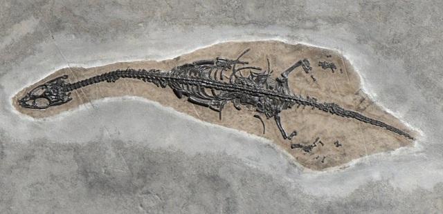 Những hóa thạch được bảo quản tốt nhất của các sinh vật bí ẩn cổ xưa - 11