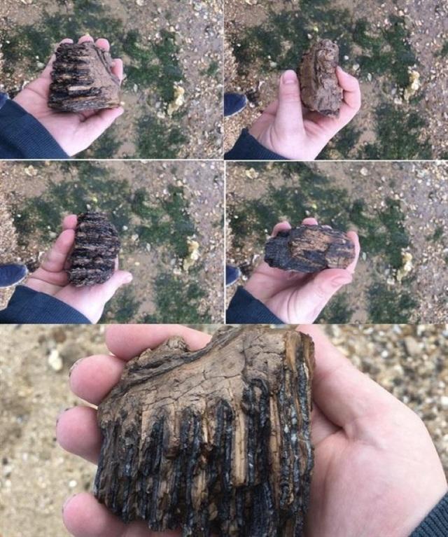 Những hóa thạch được bảo quản tốt nhất của các sinh vật bí ẩn cổ xưa - 15