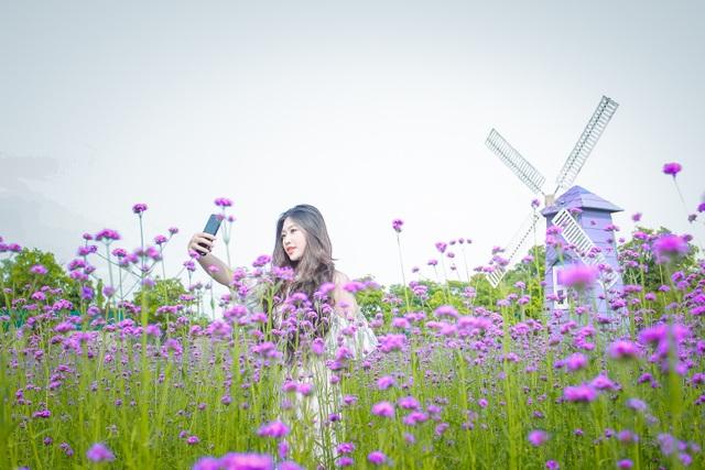 Hà Nội: Rủ nhau check-in với cánh đồng oải hương thảo đẹp như trời Tây - 8