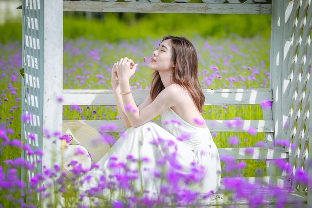 Hà Nội: Rủ nhau check-in với cánh đồng oải hương thảo đẹp như trời Tây - 2