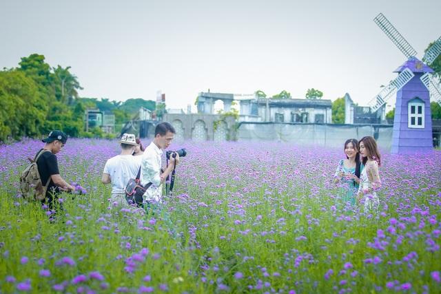 Hà Nội: Rủ nhau check-in với cánh đồng oải hương thảo đẹp như trời Tây - 11