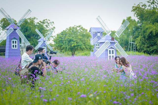 Hà Nội: Rủ nhau check-in với cánh đồng oải hương thảo đẹp như trời Tây - 12