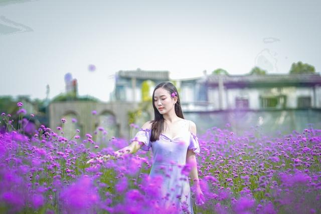 Hà Nội: Rủ nhau check-in với cánh đồng oải hương thảo đẹp như trời Tây - 10