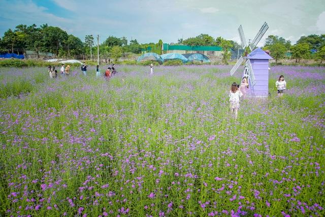 Hà Nội: Rủ nhau check-in với cánh đồng oải hương thảo đẹp như trời Tây - 4