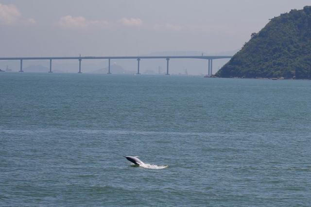 Cá heo quý hiếm bất ngờ trở lại vùng biển sau đại dịch - 2