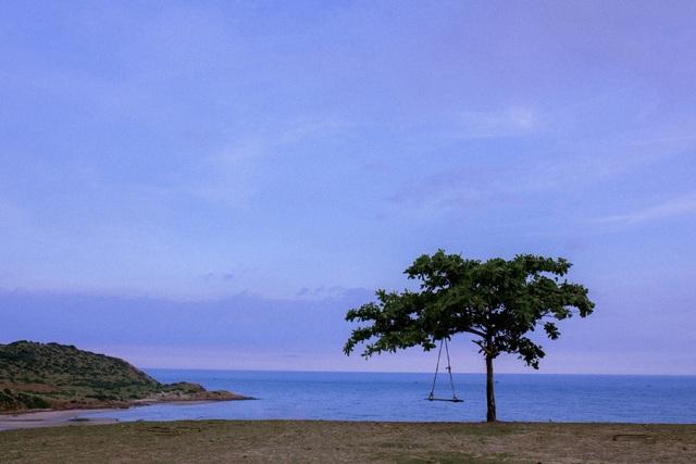 Đẹp ngỡ ngàng cây bàng cô đơn ở Bình Thuận - 5
