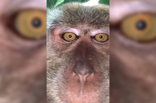 """Khỉ """"thó trộm"""" điện thoại rồi chụp ảnh tự sướng - 2"""