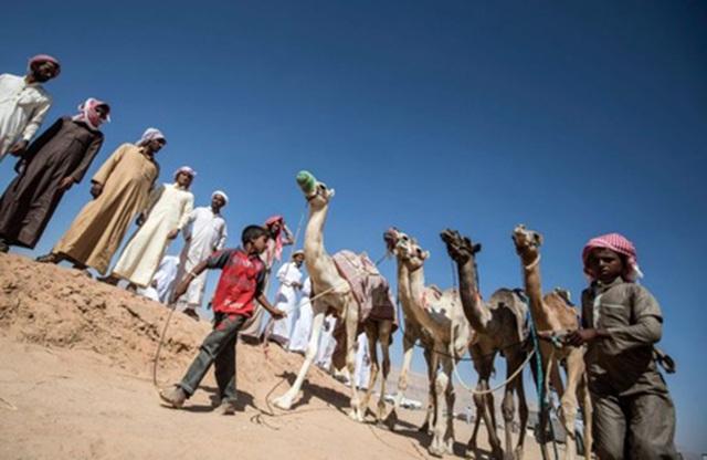 """Đường đua các """"chiến binh lưng gù"""" tại Sinai sôi động trở lại - 1"""