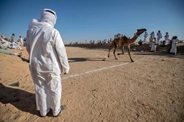"""Đường đua các """"chiến binh lưng gù"""" tại Sinai sôi động trở lại - 2"""