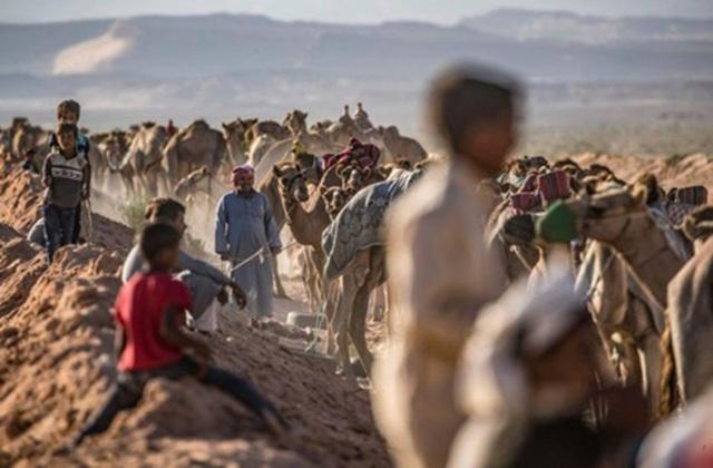 """Đường đua các """"chiến binh lưng gù"""" tại Sinai sôi động trở lại - 4"""