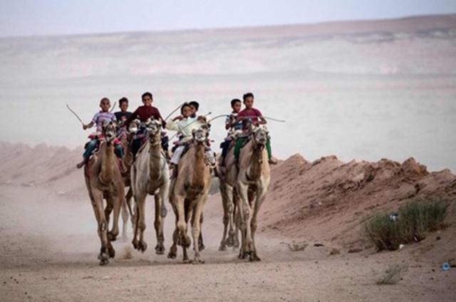 """Đường đua các """"chiến binh lưng gù"""" tại Sinai sôi động trở lại - 6"""