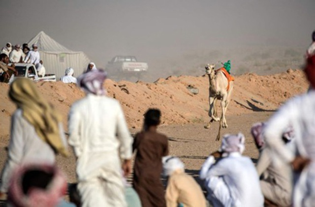 """Đường đua các """"chiến binh lưng gù"""" tại Sinai sôi động trở lại - 8"""