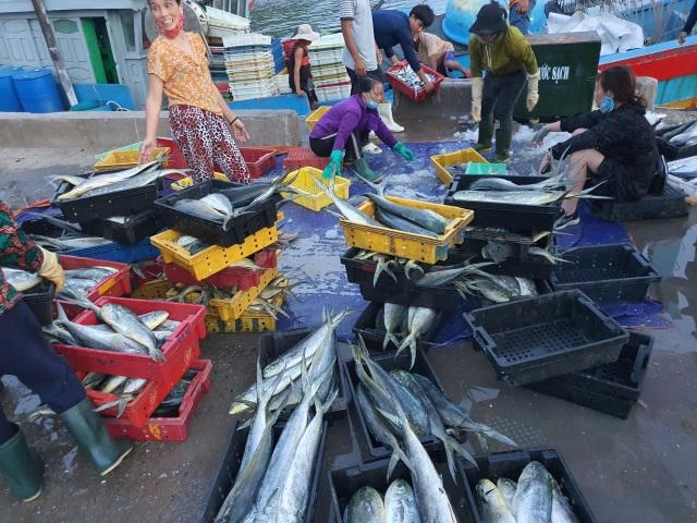 Chạy bão ngư dân vẫn trúng mẻ cá dũa thu hàng chục triệu đồng - 4