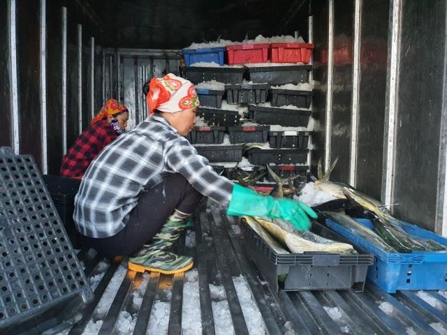 Chạy bão ngư dân vẫn trúng mẻ cá dũa thu hàng chục triệu đồng - 10