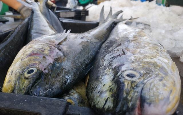 Chạy bão ngư dân vẫn trúng mẻ cá dũa thu hàng chục triệu đồng - 7