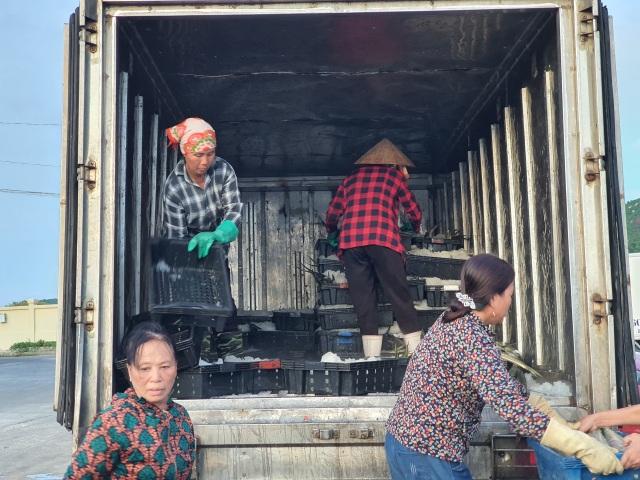Chạy bão ngư dân vẫn trúng mẻ cá dũa thu hàng chục triệu đồng - 11