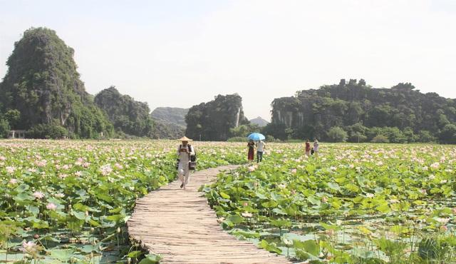 Trồng sen Nhật, thả cá và làm du lịch ở ruộng lúa, nông dân kiếm bộn tiền - 7