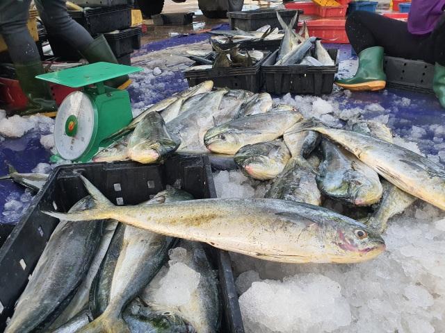 Chạy bão ngư dân vẫn trúng mẻ cá dũa thu hàng chục triệu đồng - 12