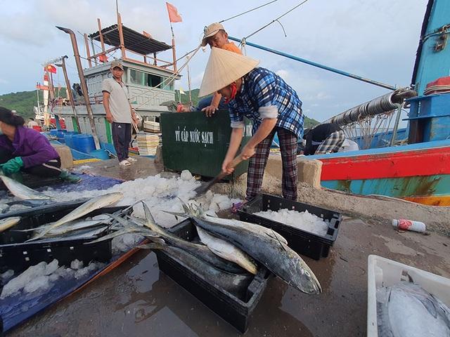 Chạy bão ngư dân vẫn trúng mẻ cá dũa thu hàng chục triệu đồng - 9