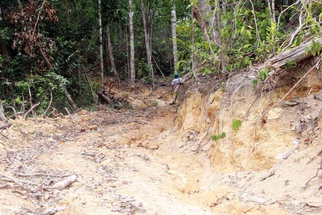 Thủ tướng yêu cầu kiểm tra, xử lý nạn chảy máu rừng già ở Phú Yên - 6
