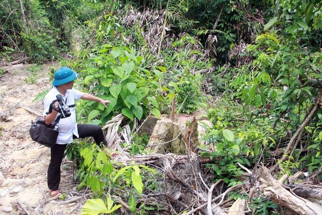 Thủ tướng yêu cầu kiểm tra, xử lý nạn chảy máu rừng già ở Phú Yên - 4