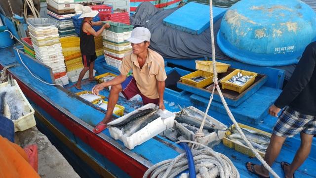 Chạy bão ngư dân vẫn trúng mẻ cá dũa thu hàng chục triệu đồng - 5